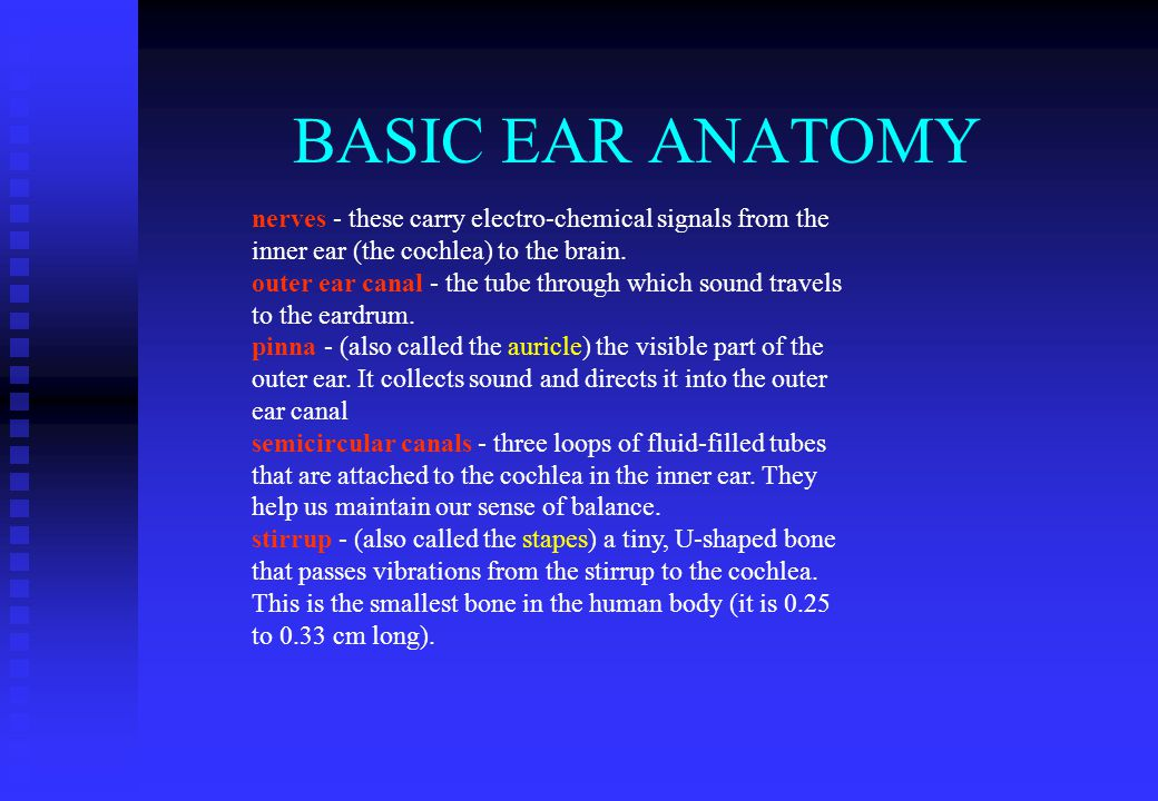 BASIC EAR ANATOMY nerves - these carry electro-chemical signals from the inner ear (the cochlea) to the brain.
