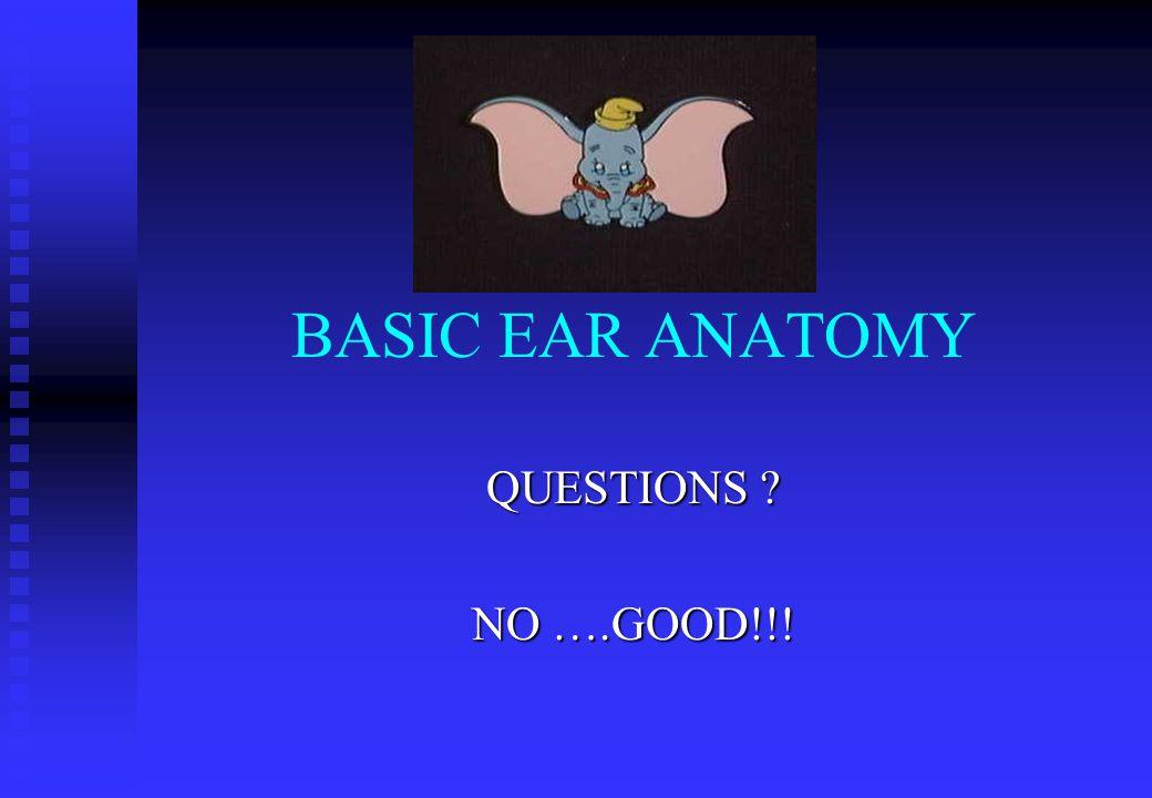 BASIC EAR ANATOMY QUESTIONS NO ….GOOD!!!