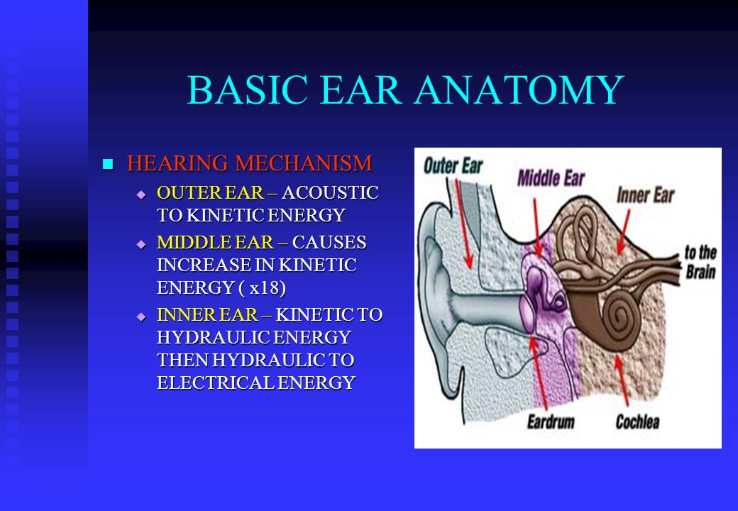 BASIC EAR ANATOMY HEARING MECHANISM HEARING MECHANISM  OUTER EAR – ACOUSTIC TO KINETIC ENERGY  MIDDLE EAR – CAUSES INCREASE IN KINETIC ENERGY ( x18)