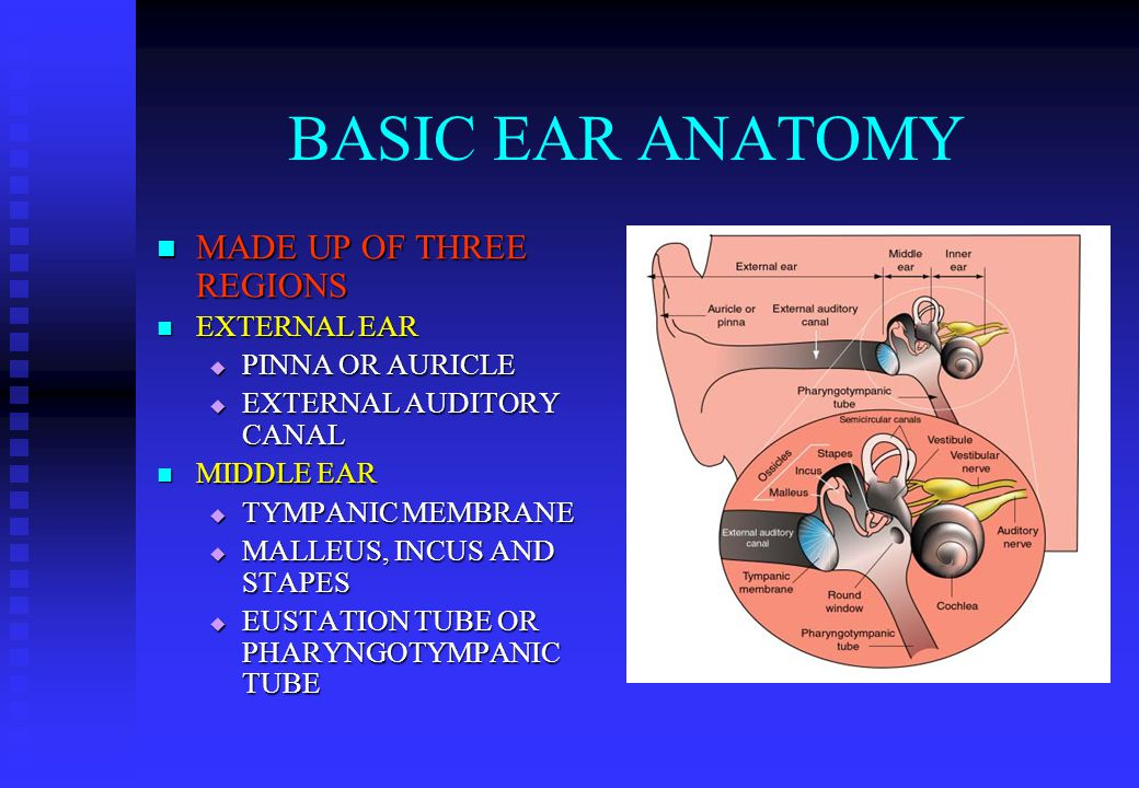 BASIC EAR ANATOMY MADE UP OF THREE REGIONS MADE UP OF THREE REGIONS EXTERNAL EAR EXTERNAL EAR  PINNA OR AURICLE  EXTERNAL AUDITORY CANAL MIDDLE EAR