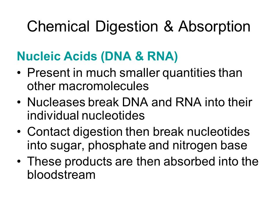 Chemical Digestion & Absorption Nucleic Acids (DNA & RNA) Present in much smaller quantities than other macromolecules Nucleases break DNA and RNA int