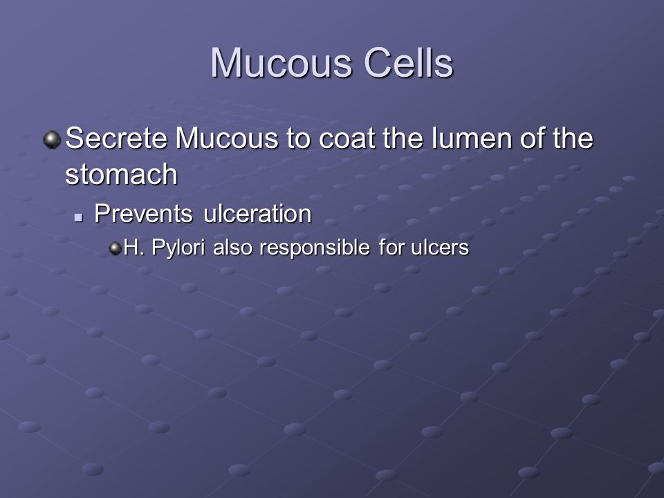 Mucous Cells Secrete Mucous to coat the lumen of the stomach Prevents ulceration Prevents ulceration H.