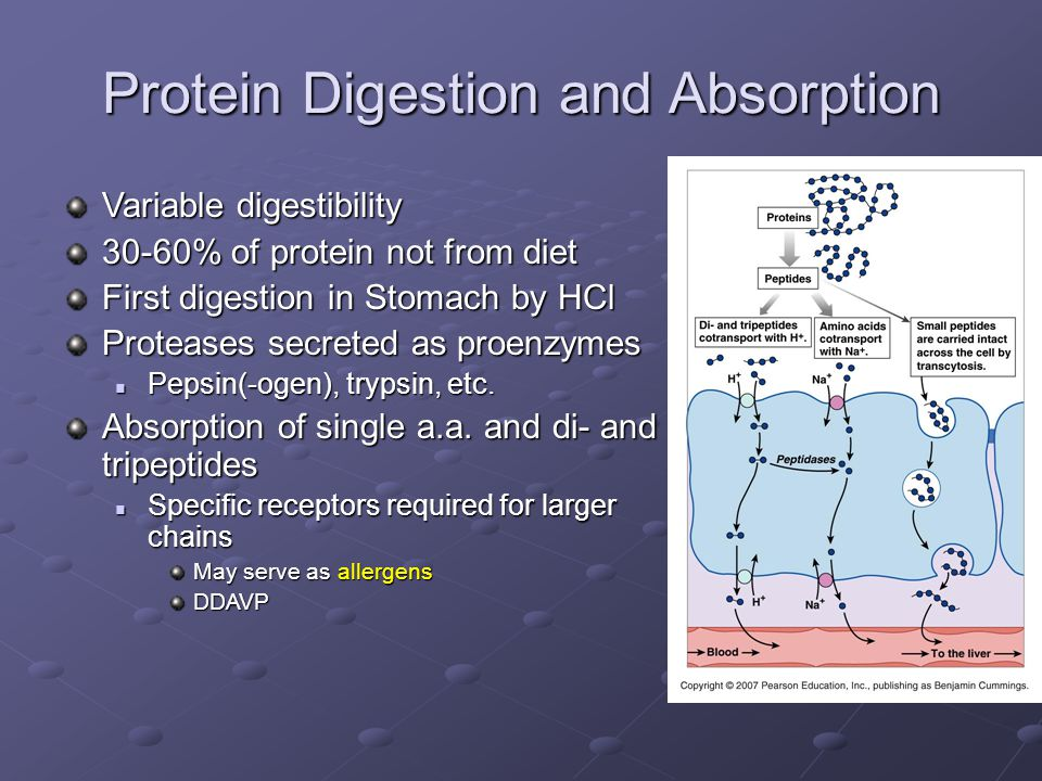 Protein Digestion and Absorption Variable digestibility 30-60% of protein not from diet First digestion in Stomach by HCl Proteases secreted as proenzymes Pepsin(-ogen), trypsin, etc.
