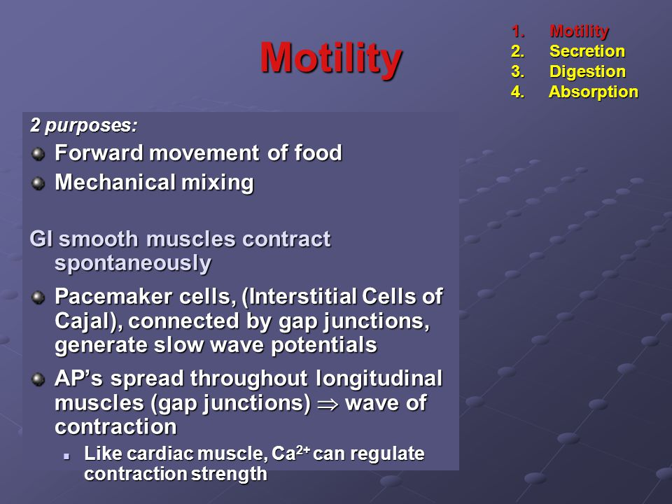 Motility 2 purposes: Forward movement of food Mechanical mixing GI smooth muscles contract spontaneously Pacemaker cells, (Interstitial Cells of Cajal), connected by gap junctions, generate slow wave potentials AP's spread throughout longitudinal muscles (gap junctions)  wave of contraction Like cardiac muscle, Ca 2+ can regulate contraction strength Like cardiac muscle, Ca 2+ can regulate contraction strength 1.