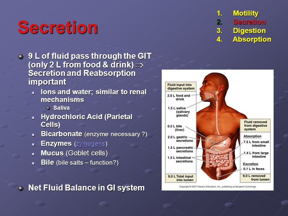 Secretion 9 L of fluid pass through the GIT (only 2 L from food & drink)  Secretion and Reabsorption important Ions and water; similar to renal mechanisms Ions and water; similar to renal mechanismsSaliva Hydrochloric Acid (Parietal Cells) Hydrochloric Acid (Parietal Cells) Bicarbonate (enzyme necessary ?) Bicarbonate (enzyme necessary ?) Enzymes (zymogens) Enzymes (zymogens)zymogens Mucus (Goblet cells) Mucus (Goblet cells) Bile (bile salts – function?) Bile (bile salts – function?) Net Fluid Balance in GI system 1.