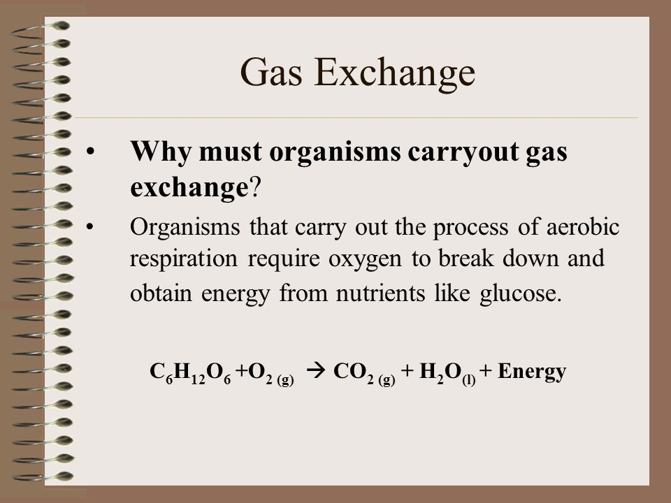 Gas Exchange Why must organisms carryout gas exchange? Organisms that carry out the process of aerobic respiration require oxygen to break down and ob