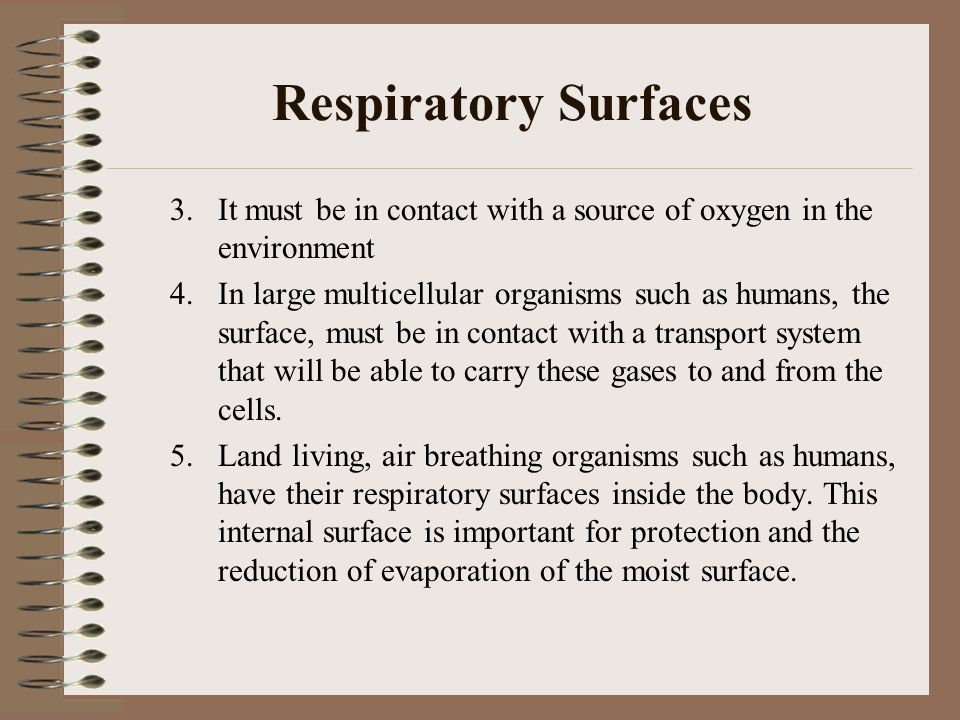 Respiratory Surfaces 3. It must be in contact with a source of oxygen in the environment 4. In large multicellular organisms such as humans, the surfa