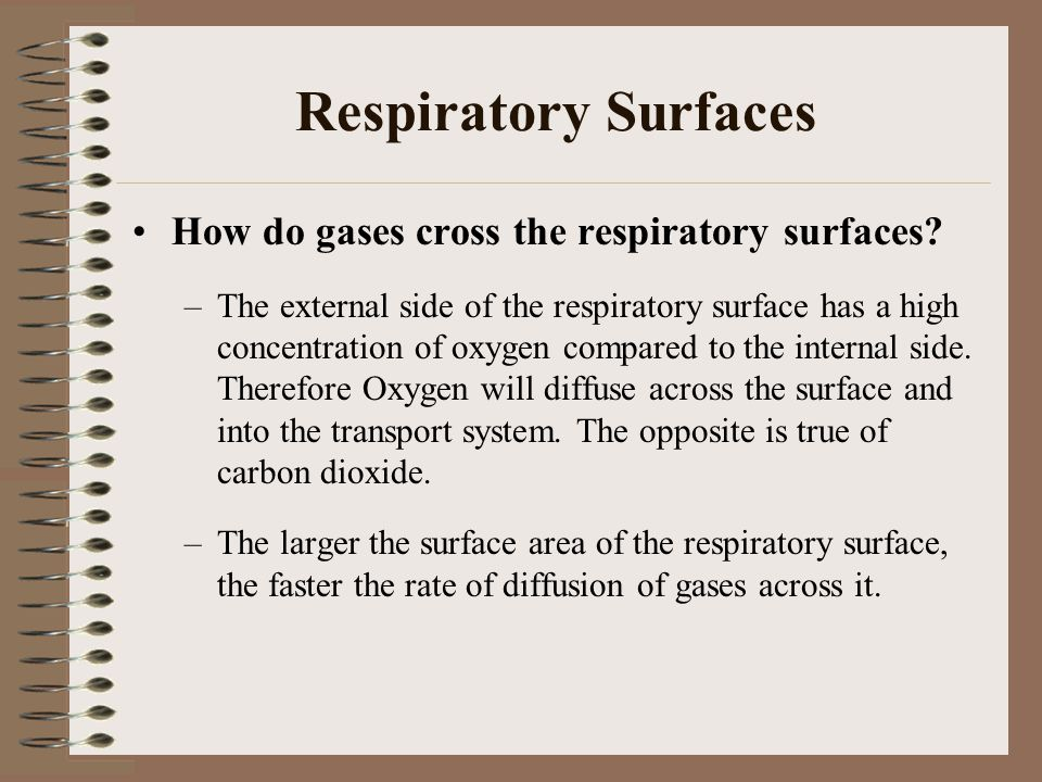 The Human Respiratory System The human respiratory system consists of the lungs and the systems of air tubes that carry air to and from the lungs.