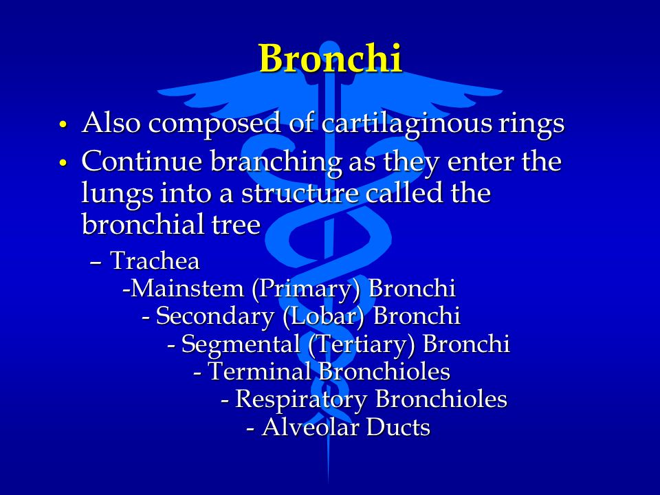 Bronchi Also composed of cartilaginous rings Also composed of cartilaginous rings Continue branching as they enter the lungs into a structure called t