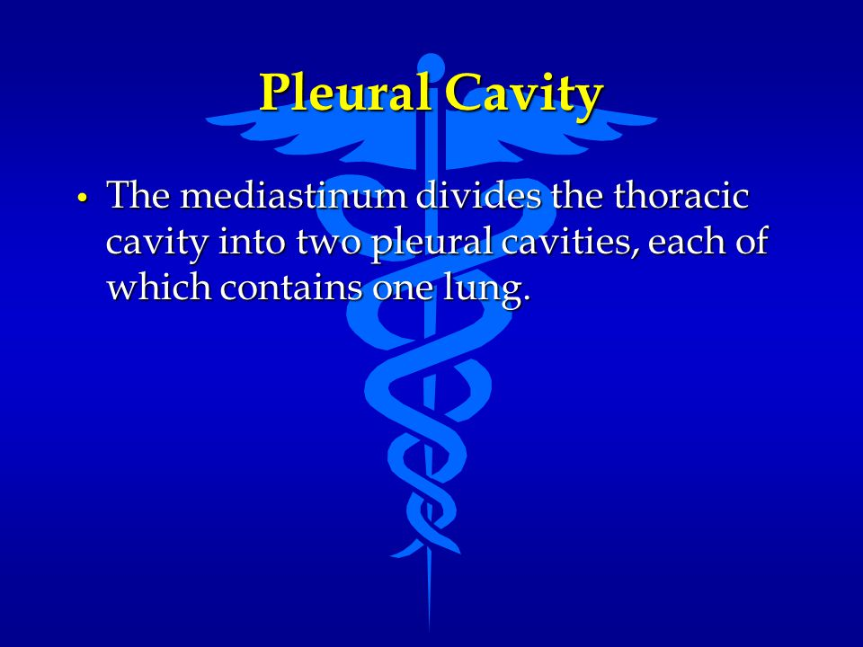 Pleural Cavity The mediastinum divides the thoracic cavity into two pleural cavities, each of which contains one lung. The mediastinum divides the tho
