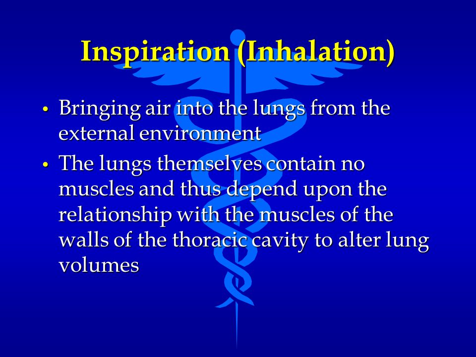 Inspiration (Inhalation) Bringing air into the lungs from the external environment Bringing air into the lungs from the external environment The lungs