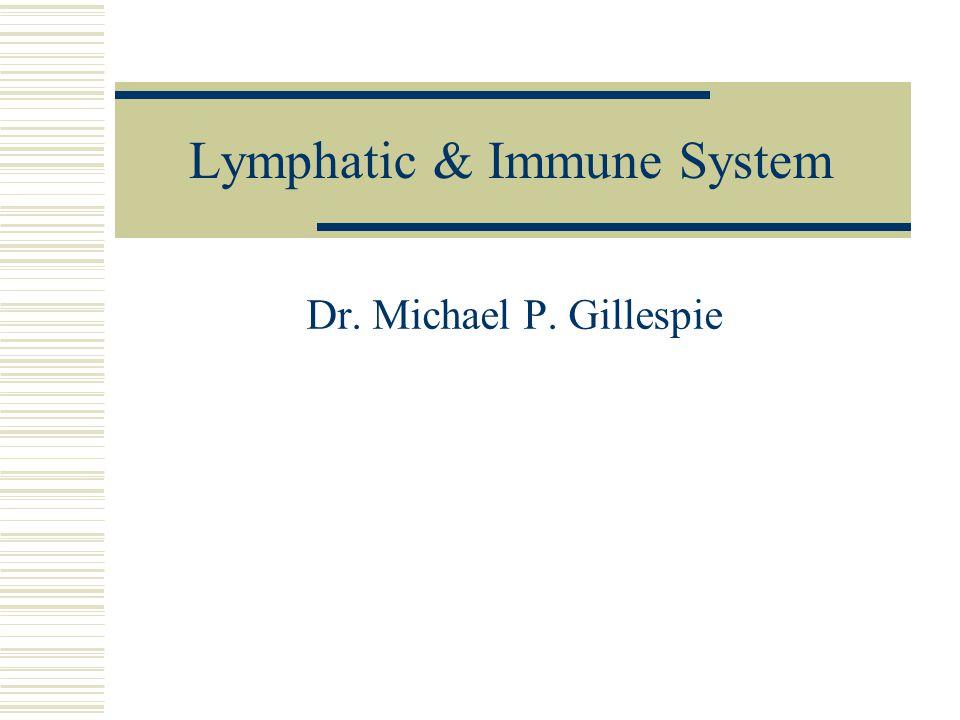 Lymphatic Capillaries  Slightly larger than blood capillaries.