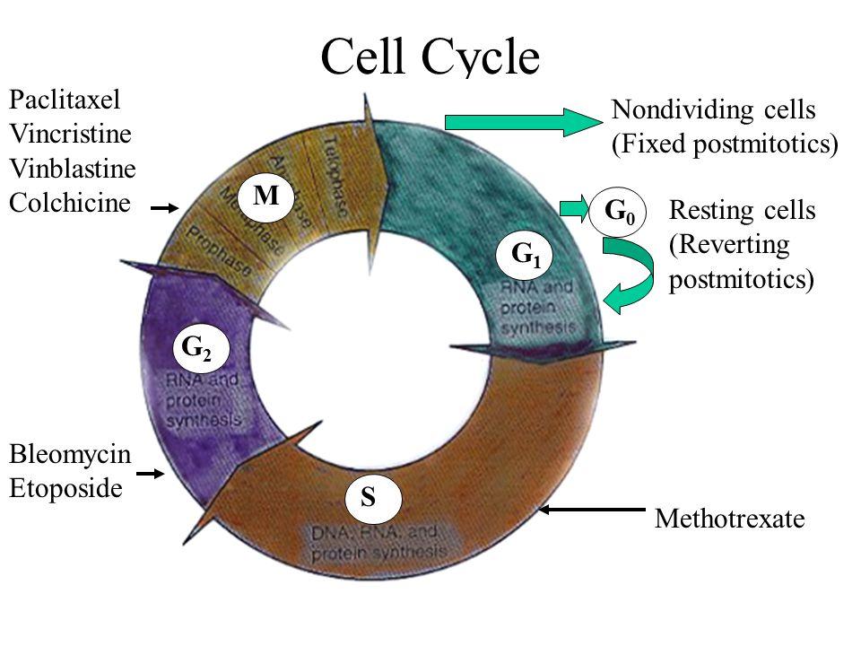 Mucous Membranes Components of Mucous Membrane: 1.
