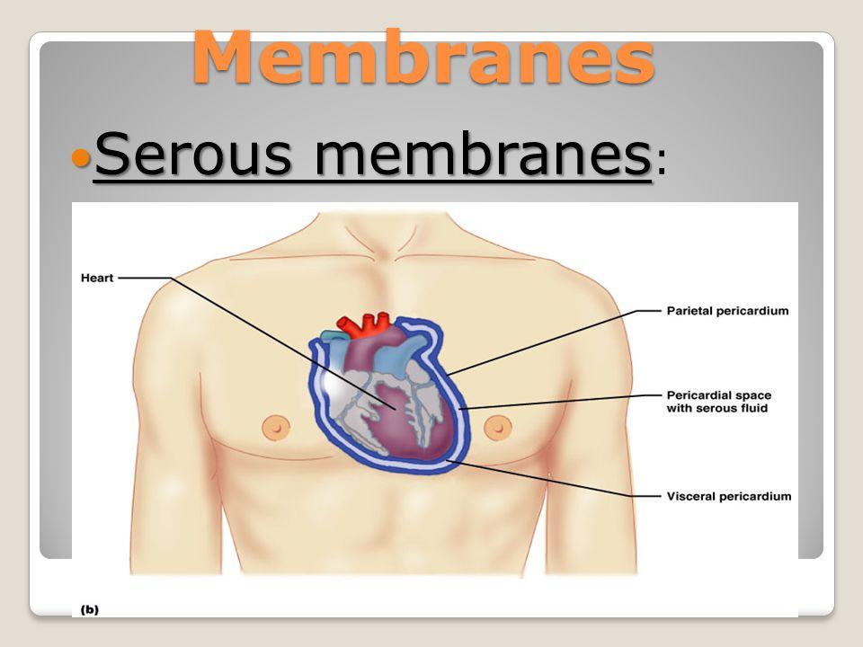 Membranes Serous membranes Serous membranes :