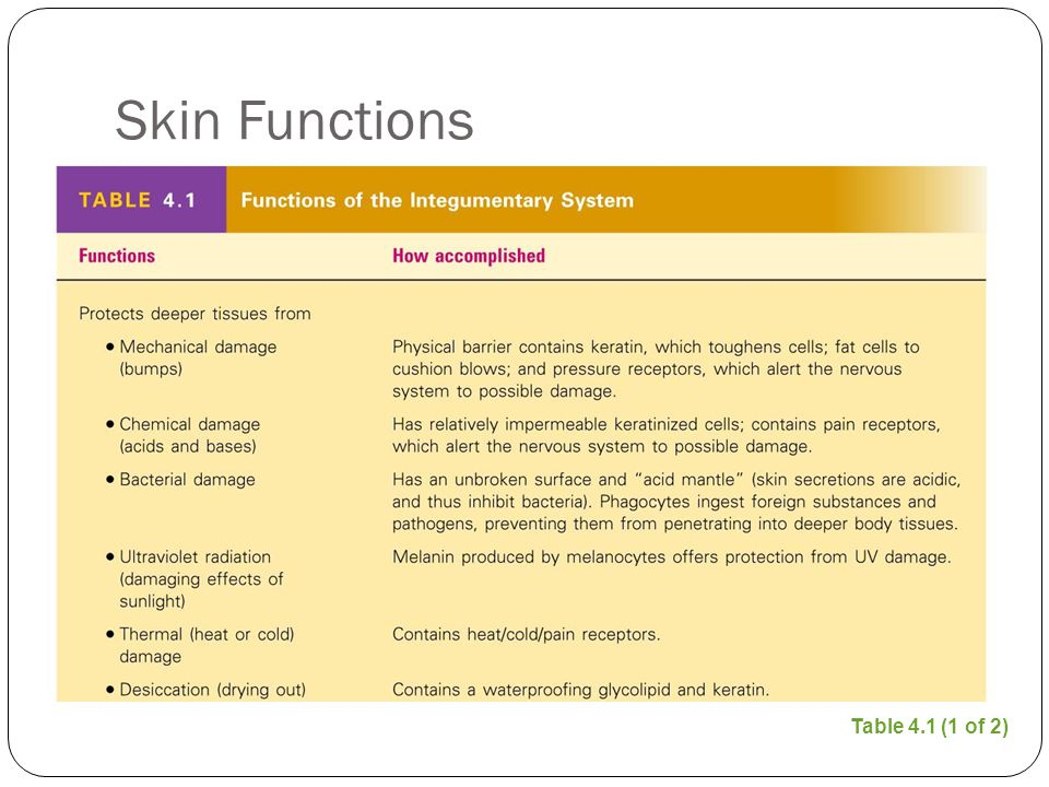 Skin Functions Table 4.1 (1 of 2)