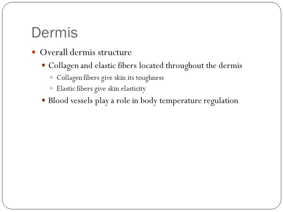 Dermis Overall dermis structure Collagen and elastic fibers located throughout the dermis Collagen fibers give skin its toughness Elastic fibers give skin elasticity Blood vessels play a role in body temperature regulation