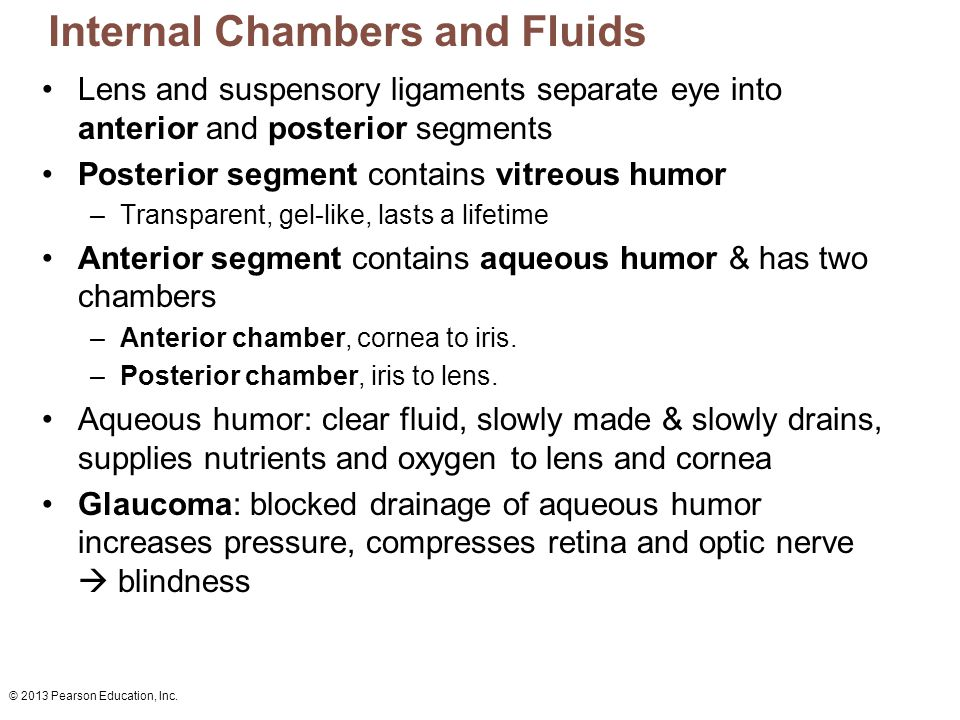 © 2013 Pearson Education, Inc. Internal Chambers and Fluids Lens and suspensory ligaments separate eye into anterior and posterior segments Posterior