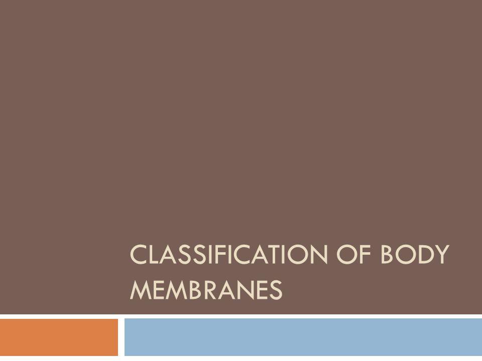 Epithelial Membranes  1. Cutaneous Membrane  2. Mucous Membranes  3. Serous Membranes