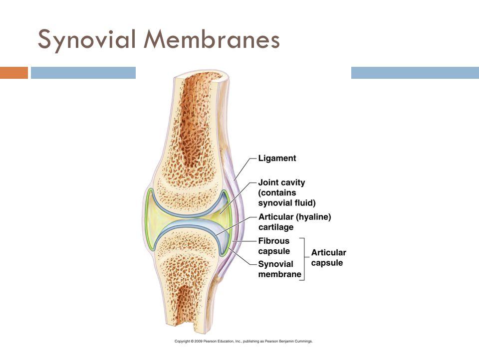 Synovial Membranes