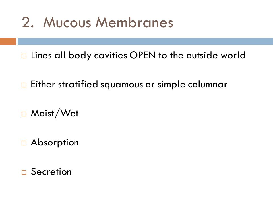 2. Mucous Membranes  Lines all body cavities OPEN to the outside world  Either stratified squamous or simple columnar  Moist/Wet  Absorption  Sec