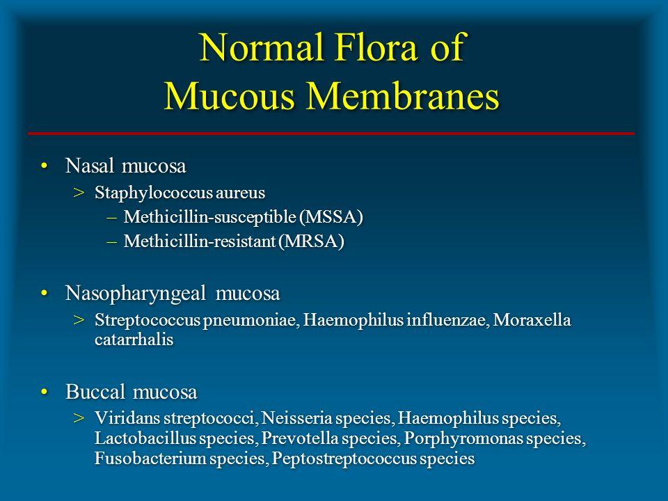 Normal Flora of Mucous Membranes Nasal mucosa >Staphylococcus aureus –Methicillin-susceptible (MSSA) –Methicillin-resistant (MRSA) Nasopharyngeal mucosa >Streptococcus pneumoniae, Haemophilus influenzae, Moraxella catarrhalis Buccal mucosa >Viridans streptococci, Neisseria species, Haemophilus species, Lactobacillus species, Prevotella species, Porphyromonas species, Fusobacterium species, Peptostreptococcus species Nasal mucosa >Staphylococcus aureus –Methicillin-susceptible (MSSA) –Methicillin-resistant (MRSA) Nasopharyngeal mucosa >Streptococcus pneumoniae, Haemophilus influenzae, Moraxella catarrhalis Buccal mucosa >Viridans streptococci, Neisseria species, Haemophilus species, Lactobacillus species, Prevotella species, Porphyromonas species, Fusobacterium species, Peptostreptococcus species