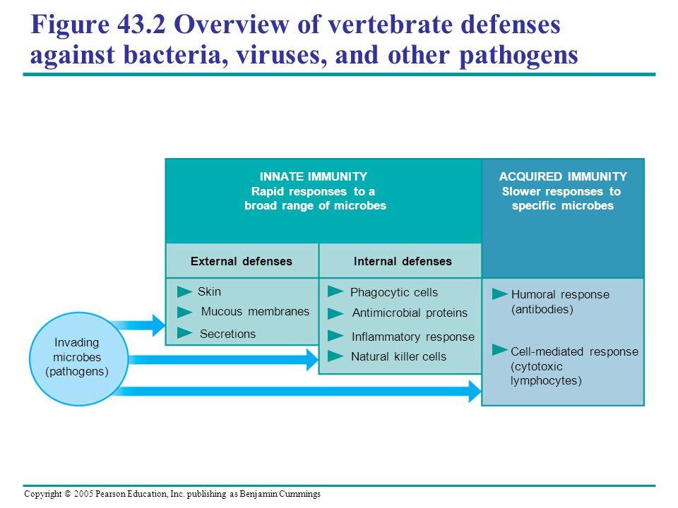 Copyright © 2005 Pearson Education, Inc. publishing as Benjamin Cummings Figure 43.2 Overview of vertebrate defenses against bacteria, viruses, and ot