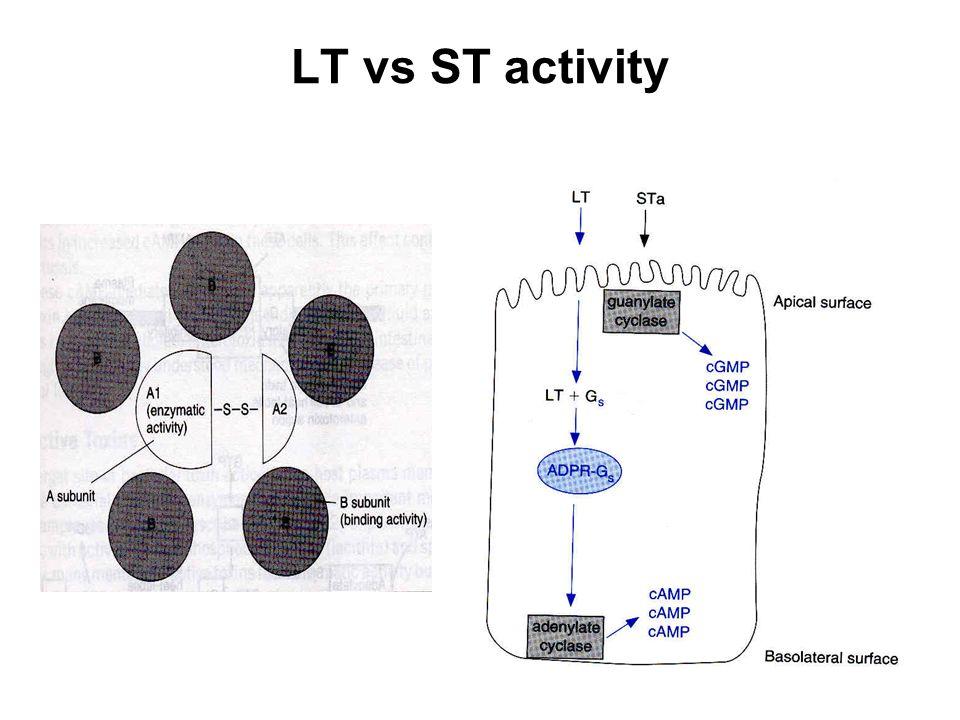 LT vs ST activity