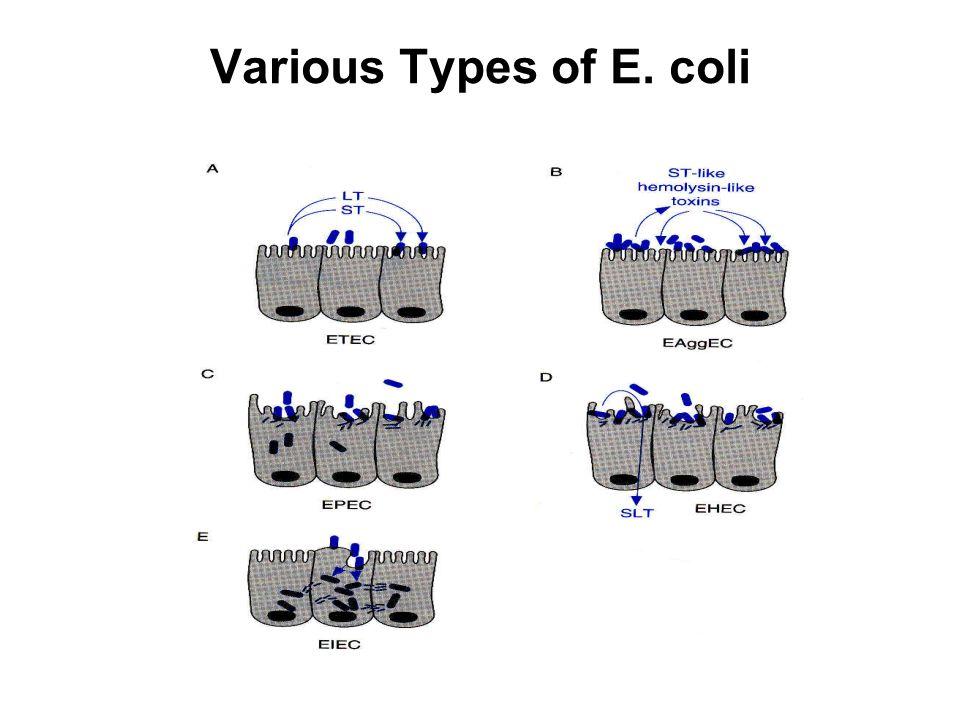 Various Types of E. coli
