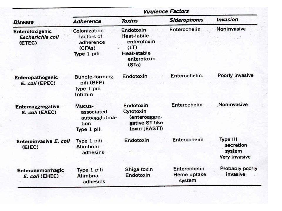 Summary of E.coli strains that cause gastroenteritis.