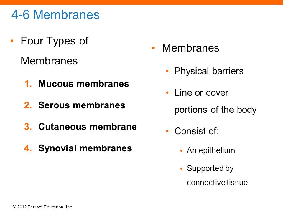 © 2012 Pearson Education, Inc. 4-6 Membranes Four Types of Membranes 1.Mucous membranes 2.Serous membranes 3.Cutaneous membrane 4.Synovial membranes M