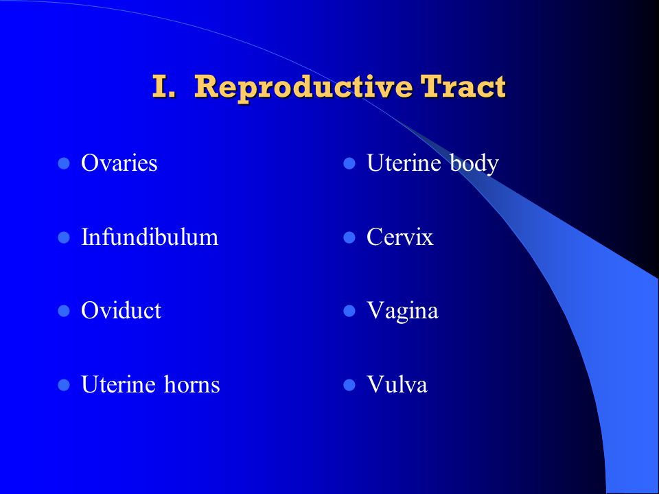 I. Reproductive Tract Ovaries Infundibulum Oviduct Uterine horns Uterine body Cervix Vagina Vulva
