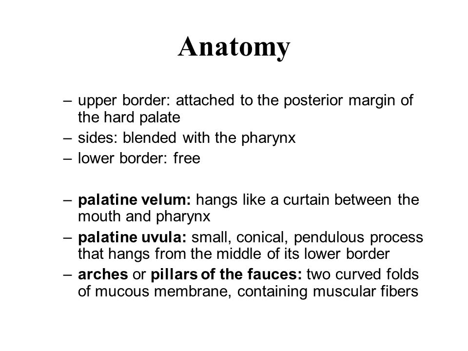 Anatomy –upper border: attached to the posterior margin of the hard palate –sides: blended with the pharynx –lower border: free –palatine velum: hangs