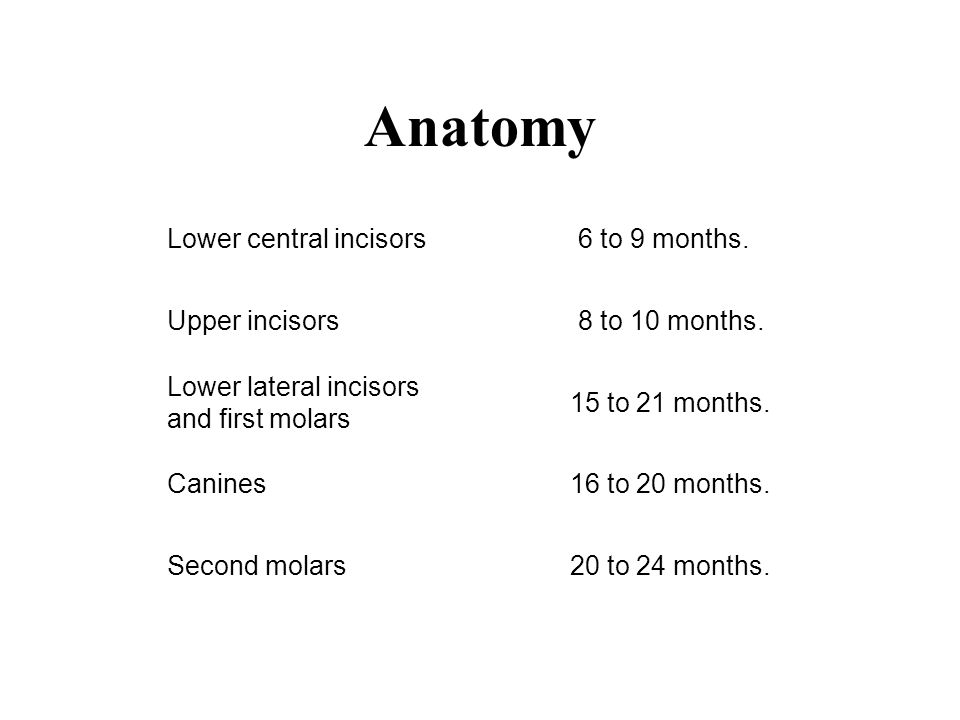 Anatomy Lower central incisors6 to 9 months. Upper incisors8 to 10 months. Lower lateral incisors and first molars 15 to 21 months. Canines16 to 20 mo