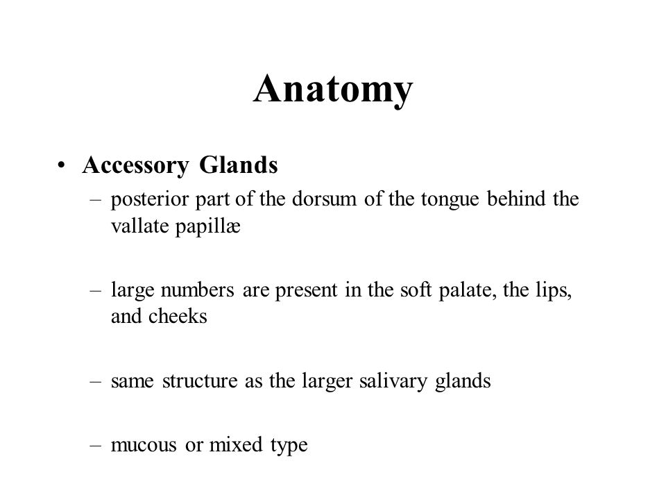 Anatomy Accessory Glands –posterior part of the dorsum of the tongue behind the vallate papillæ –large numbers are present in the soft palate, the lip