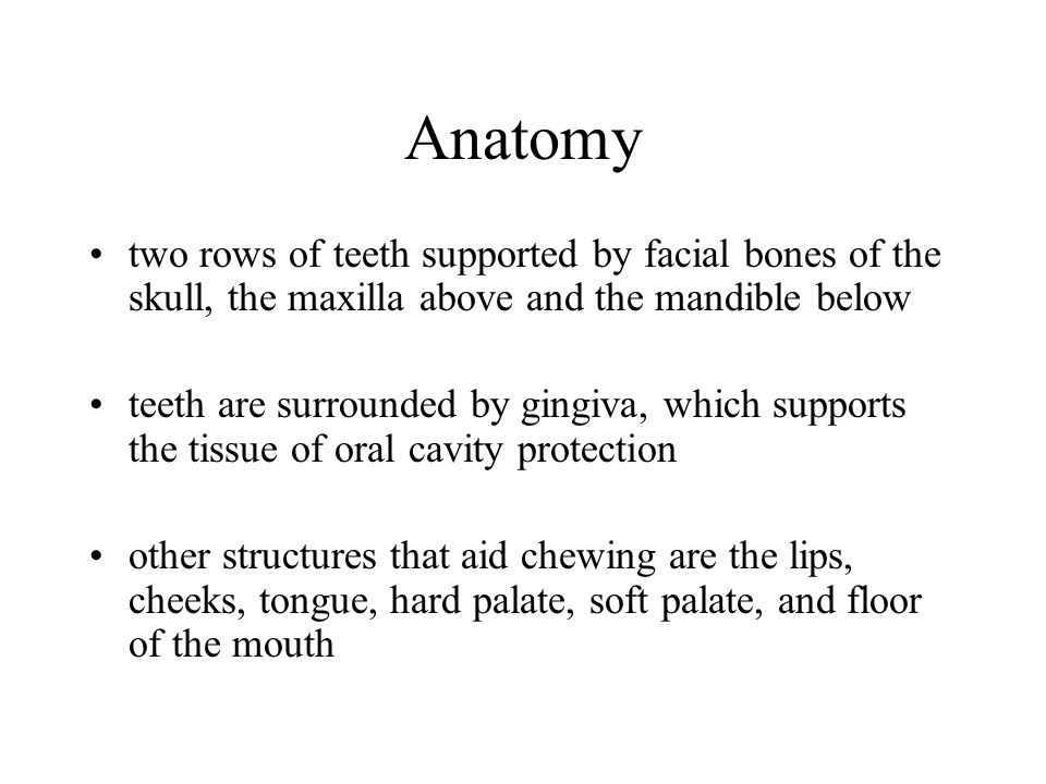 Anatomy Vestibule –externally: lips and cheeks –internally: gums and teeth –communicates with the surface of the body by the rima or orifice of the mouth –receives the secretion from the parotid salivary glands