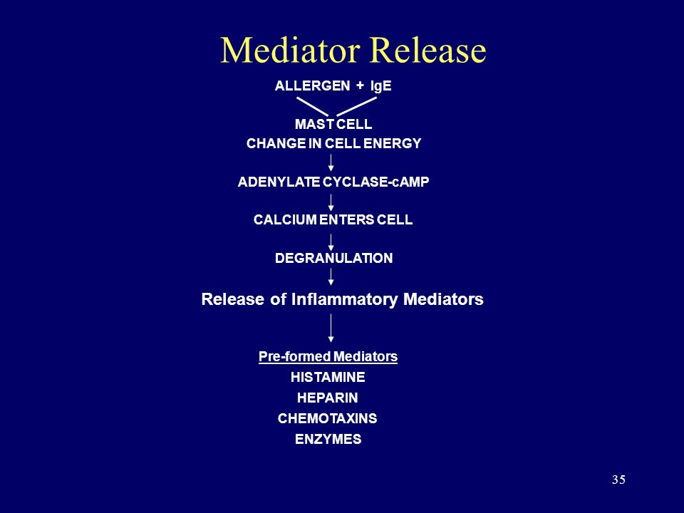 35 Mediator Release ALLERGEN + IgE MAST CELL CHANGE IN CELL ENERGY ADENYLATE CYCLASE-cAMP CALCIUM ENTERS CELL DEGRANULATION Pre-formed Mediators HISTAMINE HEPARIN CHEMOTAXINS ENZYMES Release of Inflammatory Mediators