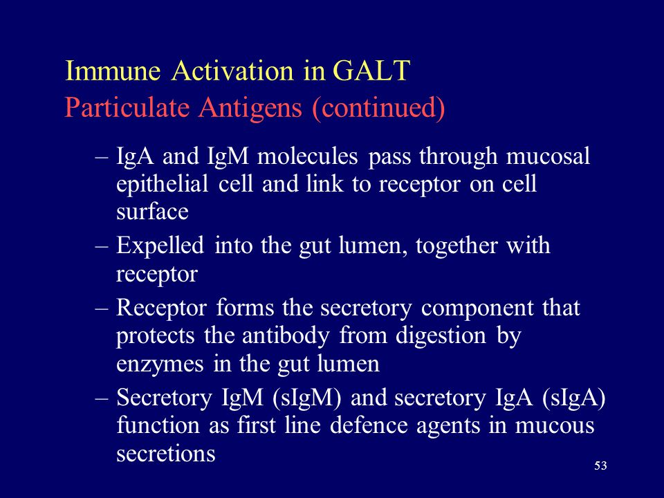 53 Immune Activation in GALT Particulate Antigens (continued) –IgA and IgM molecules pass through mucosal epithelial cell and link to receptor on cell surface –Expelled into the gut lumen, together with receptor –Receptor forms the secretory component that protects the antibody from digestion by enzymes in the gut lumen –Secretory IgM (sIgM) and secretory IgA (sIgA) function as first line defence agents in mucous secretions