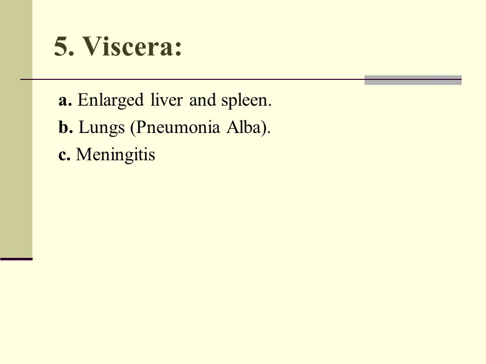 5. Viscera: a. Enlarged liver and spleen. b. Lungs (Pneumonia Alba). c. Meningitis