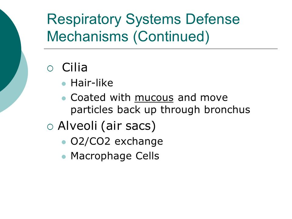 Respiratory Systems Defense Mechanisms (Continued)  Cilia Hair-like Coated with mucous and move particles back up through bronchus  Alveoli (air sac