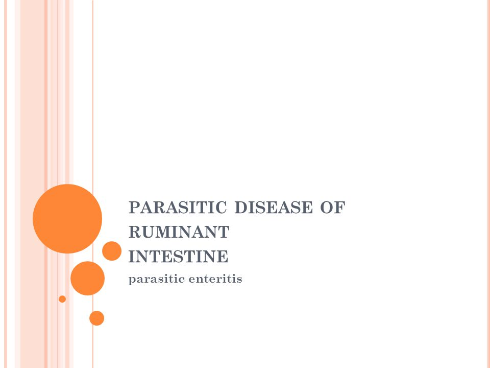 PARASITIC DISEASE OF RUMINANT INTESTINE parasitic enteritis