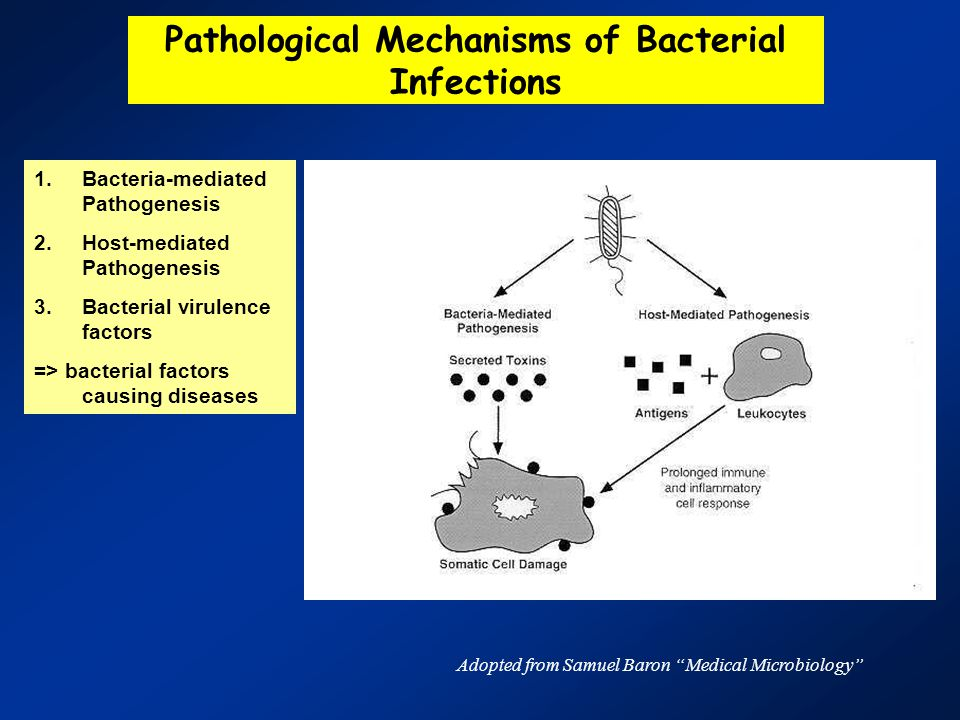 Pathological Mechanisms of Bacterial Infections 1.Bacteria-mediated Pathogenesis 2.Host-mediated Pathogenesis 3.Bacterial virulence factors => bacterial factors causing diseases Adopted from Samuel Baron Medical Microbiology