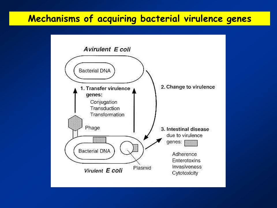 Mechanisms of acquiring bacterial virulence genes