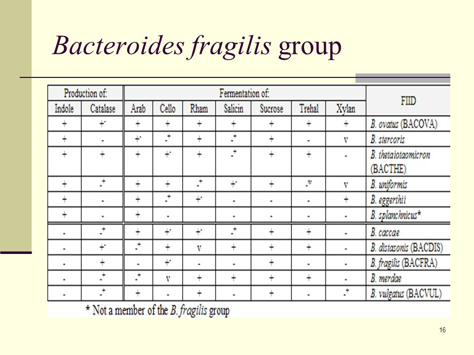 16 Bacteroides fragilis group
