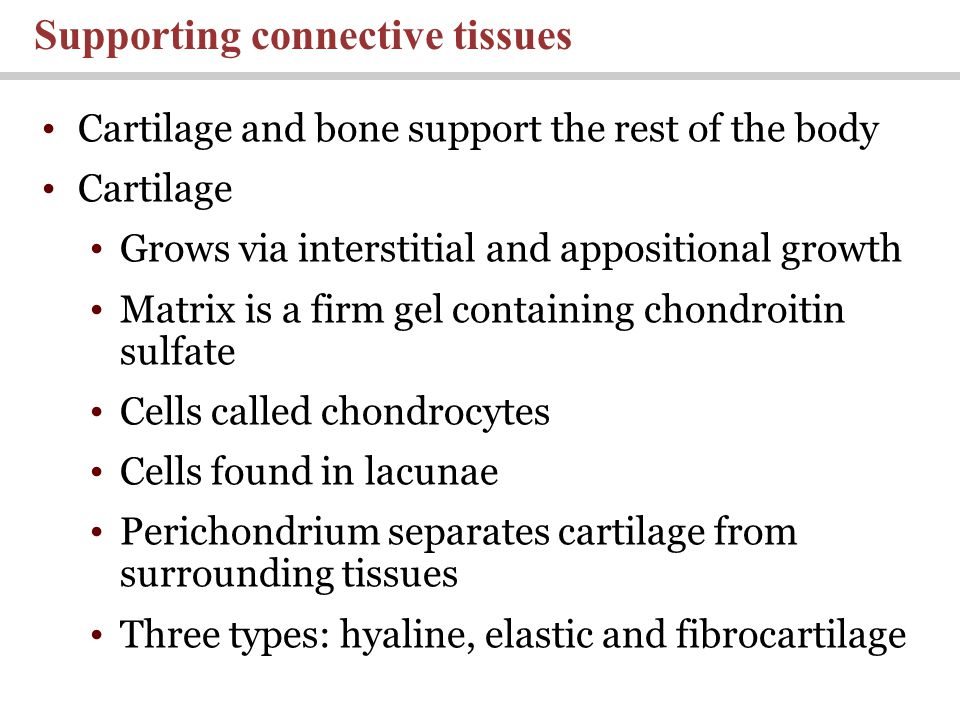 Cartilage and bone support the rest of the body Cartilage Grows via interstitial and appositional growth Matrix is a firm gel containing chondroitin s