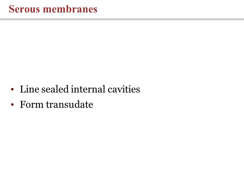 Line sealed internal cavities Form transudate Serous membranes