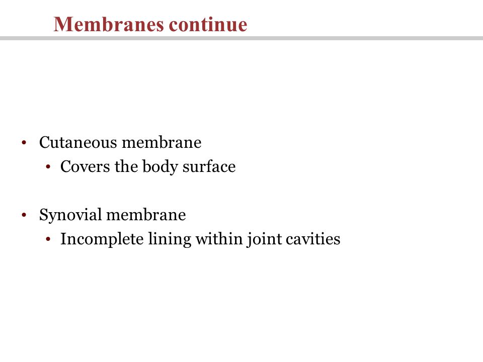 Cutaneous membrane Covers the body surface Synovial membrane Incomplete lining within joint cavities Membranes continue