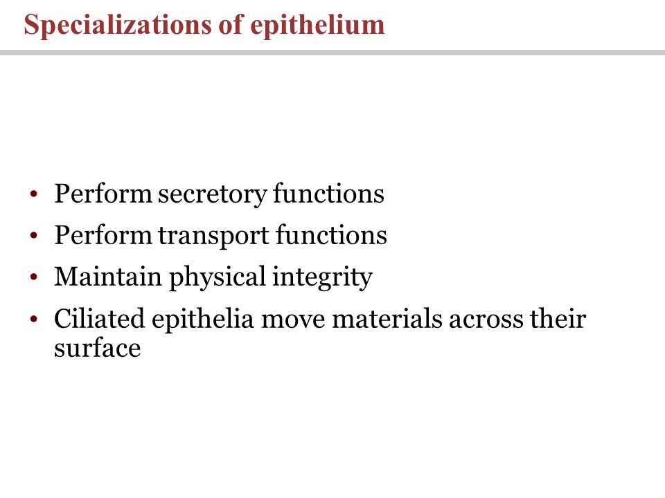 Perform secretory functions Perform transport functions Maintain physical integrity Ciliated epithelia move materials across their surface Specializat