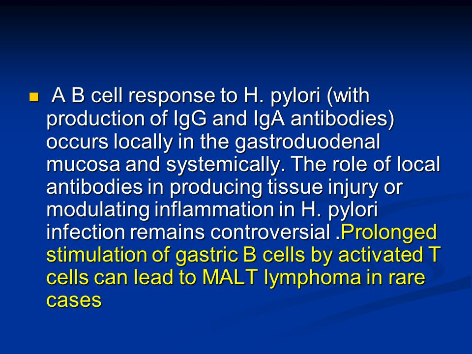 A B cell response to H. pylori (with production of IgG and IgA antibodies) occurs locally in the gastroduodenal mucosa and systemically. The role of l