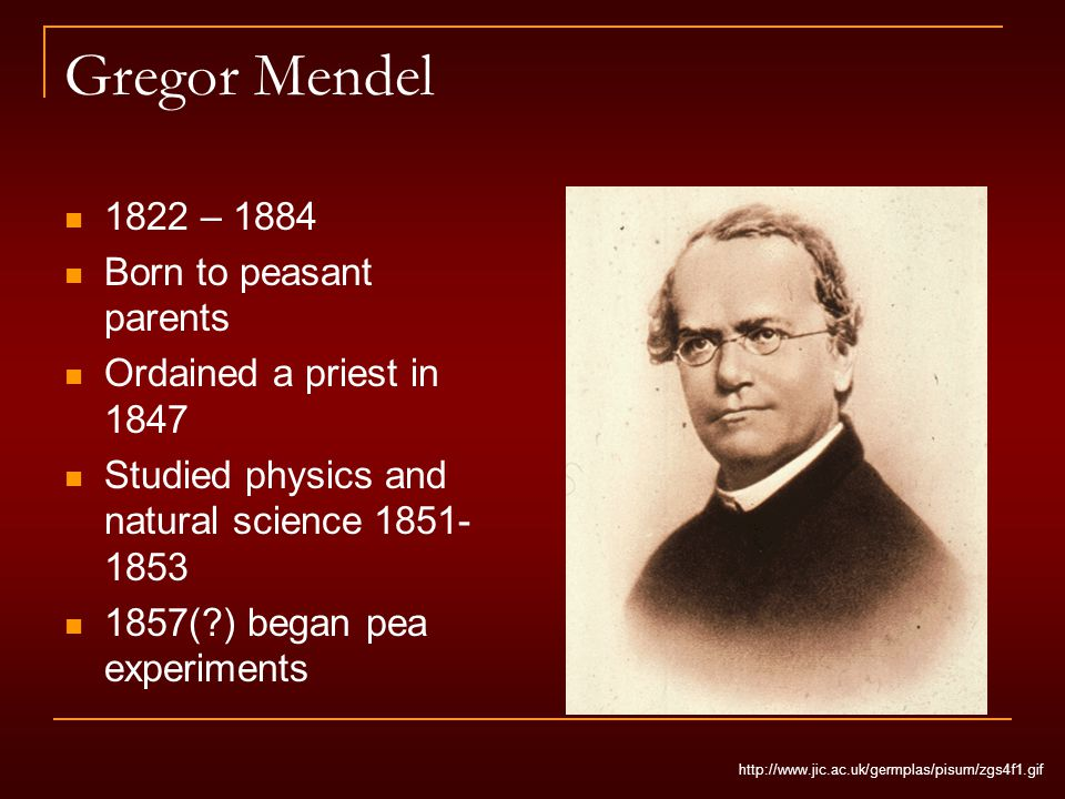 Gregor Mendel 1822 – 1884 Born to peasant parents Ordained a priest in 1847 Studied physics and natural science 1851- 1853 1857( ) began pea experiments http://www.jic.ac.uk/germplas/pisum/zgs4f1.gif