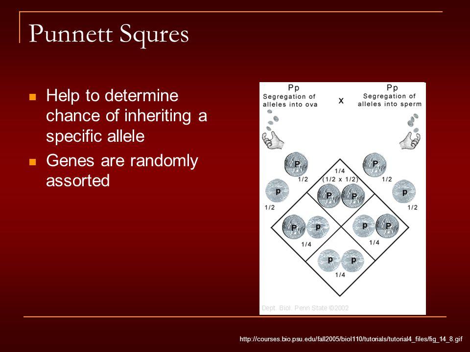 Punnett Squres Help to determine chance of inheriting a specific allele Genes are randomly assorted http://courses.bio.psu.edu/fall2005/biol110/tutori